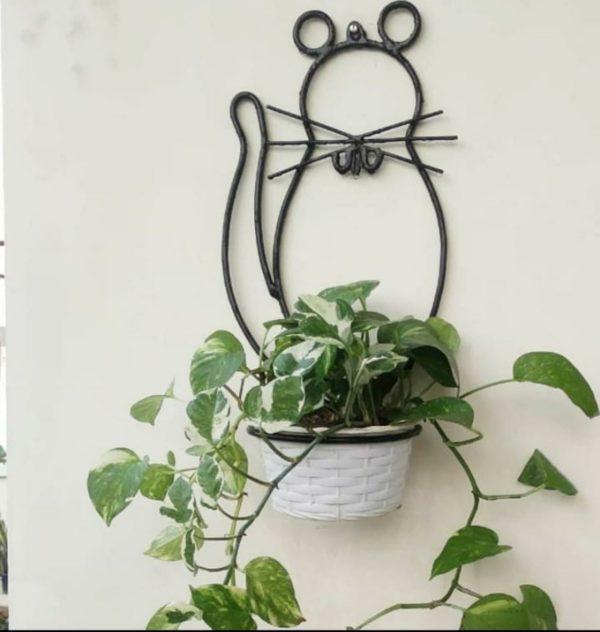 plants_jaipur