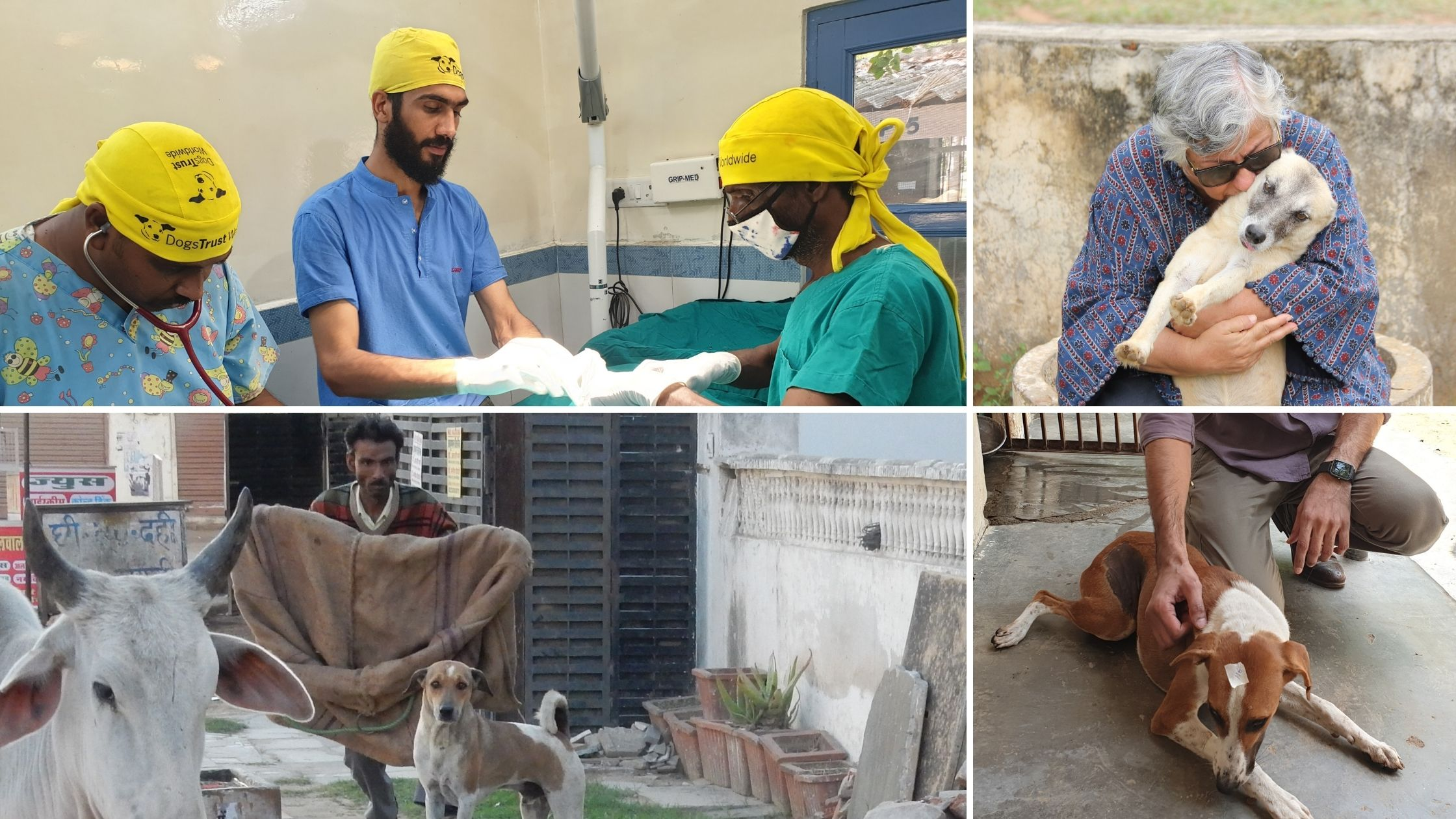 The concerted efforts of Help in Suffering, a 41-year-old animal welfare organization, towards birth control among dogs in the city have greatly reduced instances of dog bites as well as human rabies in Jaipur.